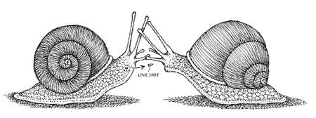 12-snail-darts