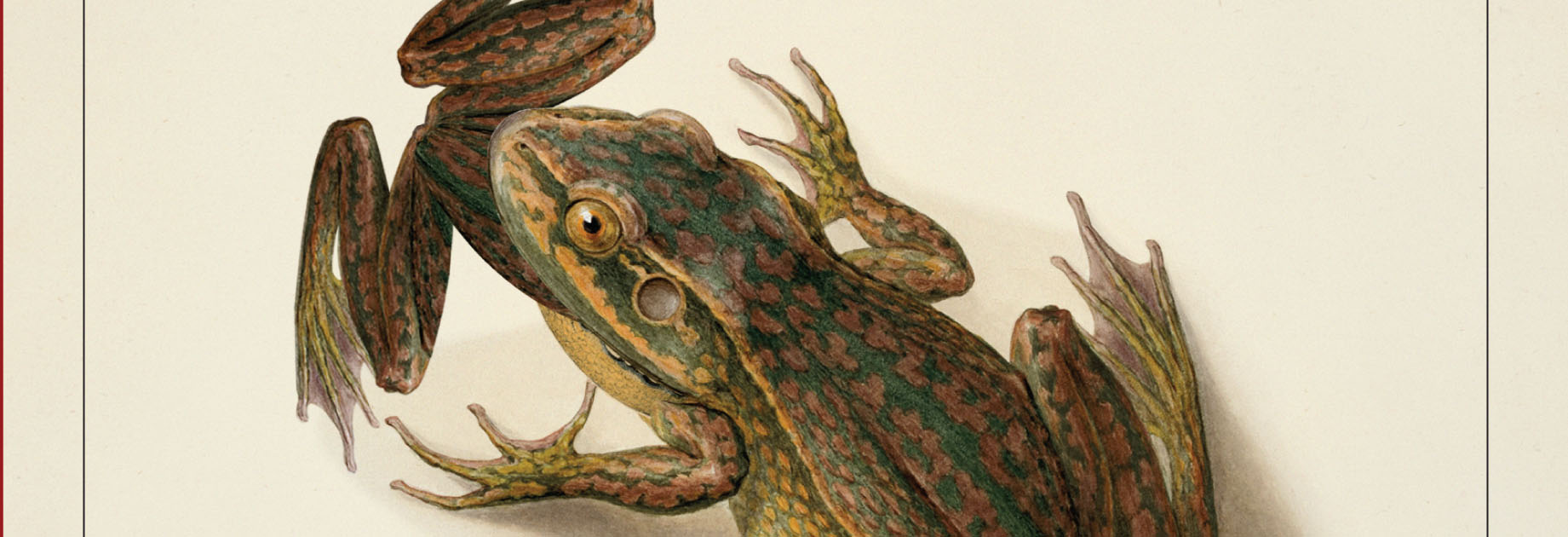 cannibalism Cannibalism: A Perfectly Natural History